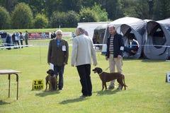 Dog Show Royalty Free Stock Image