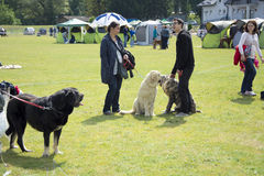 Dog Show Royalty Free Stock Photo