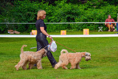 Dog show. In Sokolniki Park, Moscow city, Russia Royalty Free Stock Images