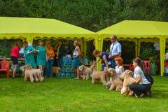 Dog show. In Sokolniki Park, Moscow city, Russia Stock Photos