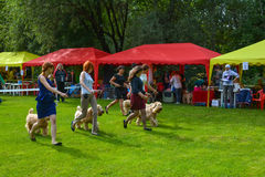 Dog show Royalty Free Stock Images