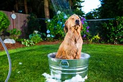 Dog shower Stock Photo