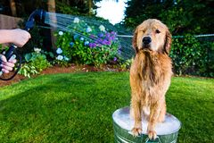 Dog shower Royalty Free Stock Photo