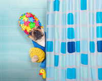 Dog in shower Royalty Free Stock Image