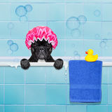 Dog in shower Royalty Free Stock Photos