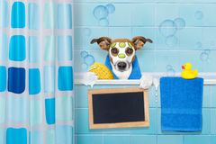 Dog in shower royalty free stock images