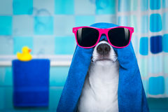 Dog in shower  or wellness spa Royalty Free Stock Photo