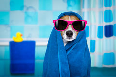 Dog in shower  or wellness spa Royalty Free Stock Photos