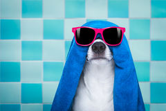 Dog in shower  or wellness spa Royalty Free Stock Images