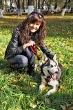 Dog siberian husky and young woman Stock Image