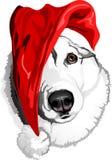 Dog Siberian skrovligt för avel i klockan av Santa Claus Arkivbild
