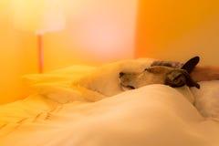 Dog sick , ill or sleeping Stock Photo