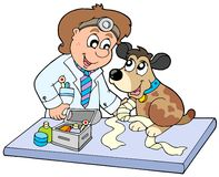 Dog with sick paw at veterinarian Royalty Free Stock Images