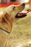 Dog Side View stock photos