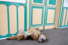Dog on a Sidewalk Royalty Free Stock Photo