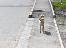 Dog on the sidewalk . Stock Photography
