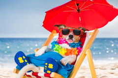 Dog siesta on beach chair Stock Photos