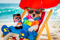 Dog siesta on beach chair. Jack russel dog resting and relaxing on a hammock or beach chair under umbrella at the beach ocean shore, on summer vacation holidays royalty free stock photos