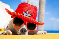 Dog siesta. Jack russell dog resting , sleeping a siesta under a palm tree, on summer vacation holidays at the beach , wearing sunglasses and a big hat sombrero stock photography