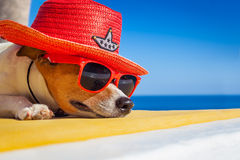 Dog siesta. Jack russell dog resting , sleeping a siesta under a palm tree, on summer vacation holidays at the beach , wearing sunglasses and a big hat sombrero royalty free stock images