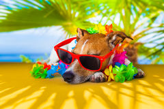Dog siesta Royalty Free Stock Photography