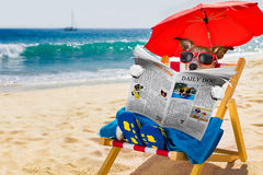 Free Dog Siesta On Beach Chair Stock Photography - 91841862