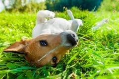 Dog siesta at park Royalty Free Stock Photos