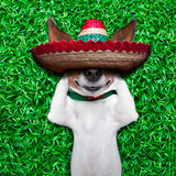 Dog siesta. Dog taking a siesta on an empty meadow with mexican sombrero chilling out royalty free stock photo