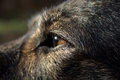 Dog sight. A close up of my dog staring at the sun Stock Image