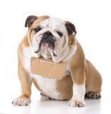 Dog with sign around neck Stock Photo