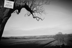 The dog sign. A tree lies just before a field in monochrome, a sign is nailed to the tree Stock Photography