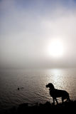 Dog silhouette. In the fog Stock Photos