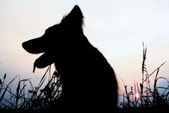 Dog silhouette. Silhouette of a dog as the sun sets Stock Photography