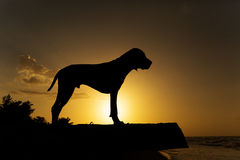 Dog silhouette against the sunset Stock Photos