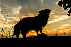 Dog Silhouette. Beautiful Dog Silhouette / Sunset Landscape Stock Image