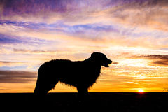 Dog Silhouette. Beautiful Dog Silhouette / Sunset Landscape Royalty Free Stock Images