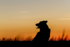 Dog Silhouette. Beautiful Dog Silhouette / Sunset Landscape Stock Photo