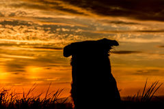 Dog Silhouette. Beautiful Dog Silhouette / Sunset Landscape Stock Photography