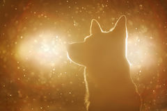 Dog silhouette in the headlights. In winter snow royalty free stock photo