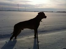 Dog silhouette in snow Stock Photo