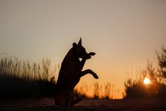 Dog silhouette at sunset Stock Photos