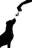 Dog silhouette on white background stares at food Royalty Free Stock Photography