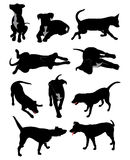 Dog silhouettes. Ten different dog silhouette poses Royalty Free Stock Photography