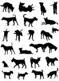 Dog silhouettes Stock Photography