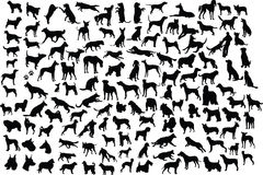 Dog silhouettes. Lots of silhouettes of different breeds of dogs in action and static