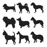 Dog Silhouettes. EPS 8 vector, grouped for easy editing. No open shapes or paths.  breeds, veterinary,  walking, pet Stock Images