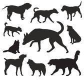Dog  Silhouettes vector set Royalty Free Stock Image