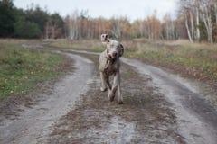 Dog Stock Image