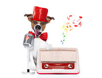 Dog singing with microphone Royalty Free Stock Photos