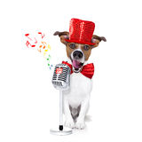 Dog singing with microphone. Jack russell dog , singing a karaoke song or reading the news using a retro mic or microphone, party hat and red tie, isolated on royalty free stock photography